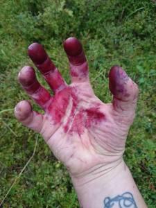 blueberry-hand